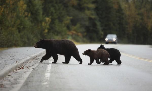 comment éviter les ours en camping | trucs pratiques