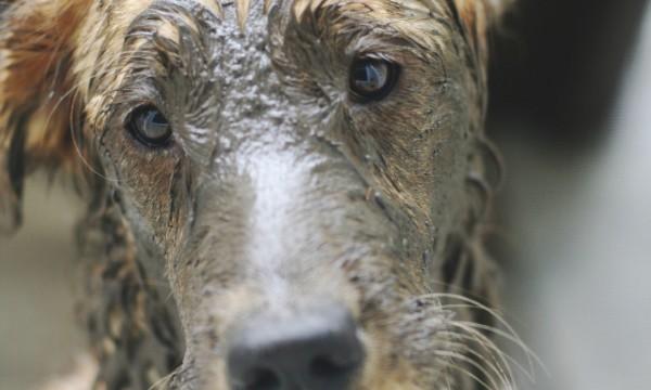 Comment désodoriser votre chien
