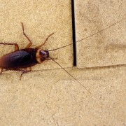 7 causes à l'origine d'une infestation d'insectes dans la maison