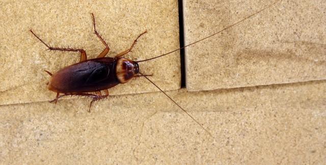 4 insectes nuisibles qui peuvent ronger votre maison trucs pratiques. Black Bedroom Furniture Sets. Home Design Ideas