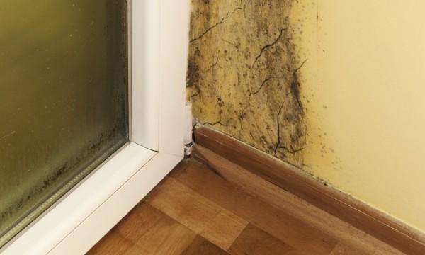 astuces pour d tecter et liminer la moisissure pour de bon trucs pratiques. Black Bedroom Furniture Sets. Home Design Ideas