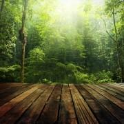 4 solutions de planchers écologiques
