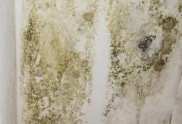 3 étapes pour se débarrasser des moisissures avant de peindre