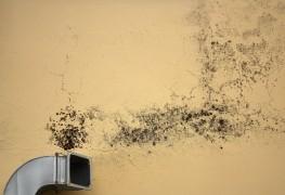 Comment vérifier si l'air de votre maison contient de la moisissure
