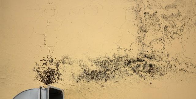 moisissure au plafond fabulous moisissure mur la moisissure et la peinture caille sur le mur et. Black Bedroom Furniture Sets. Home Design Ideas