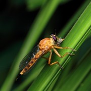 3 répulsifs et insecticidesmaison faciles à faire