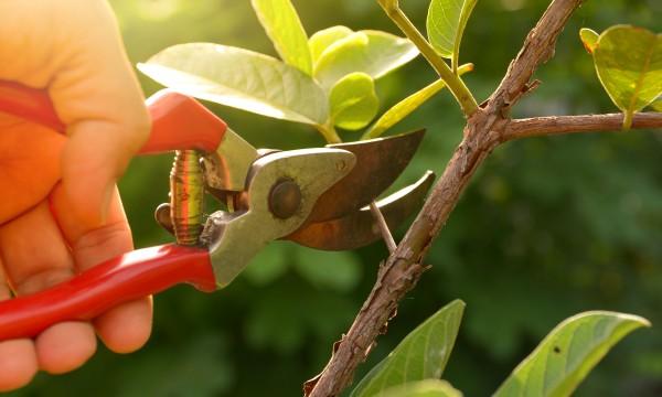 7 choses que chaque jardinier devrait faire maintenant