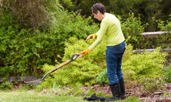 2 remèdes rapides pour votre pelouse
