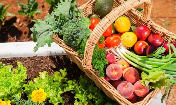 9 légumes du potager à découvrir