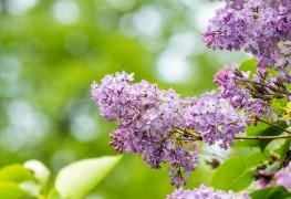 4 façons d'entretenir les arbres dans votre cour