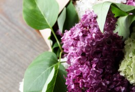 Confectionner un bouquet de lilas