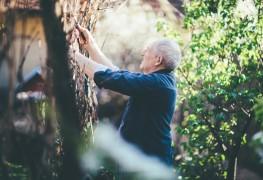 Guide intelligent pour protéger les arbustes fragilesen hiver