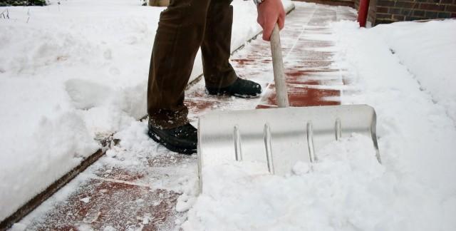 Conseils d'experts pour réduire les dommagescausés aux plantes par le sel de voirie