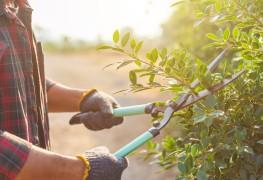 14 outils de jardin essentiels que tout jardinier devrait avoir