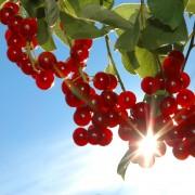 Jardinage: 5 astuces pour économiser beaucoup d'argent cet été