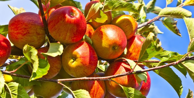 4 différences entre les pommes bios et non bios