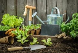La base du jardinage : 11 éléments à considérer