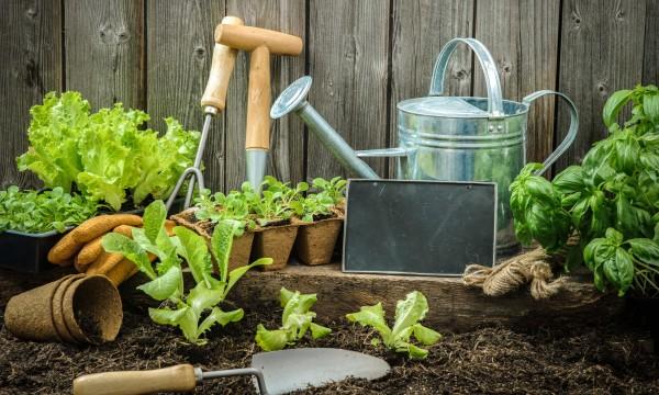 La base du jardinage : 12 incontournables