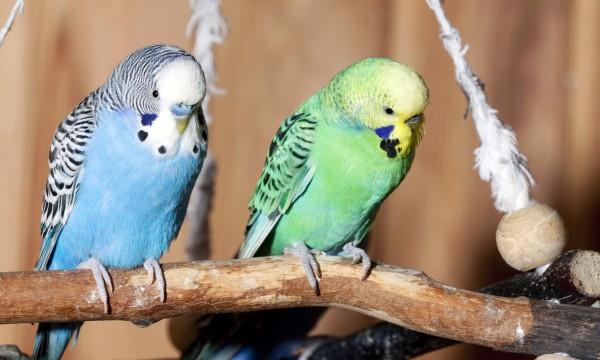 Idées de jouetset de friandises maison pour vos oiseaux de compagnie