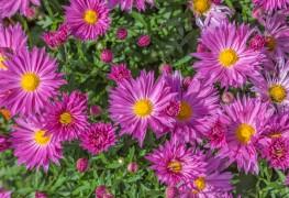 Guide complet pour planter un jardin de vivace