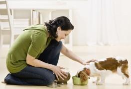 Choisir les bons suppléments pour votre animal de compagnie