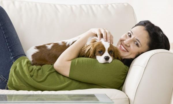 Astuces pour conserver la propreté del'environnement de votre animal de compagnie