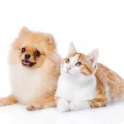 Comment garder votre animal à l'abri des vers, des tiques et des virus