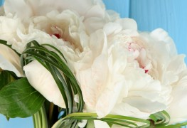Confectionner un bouquet de pivoines pour votre mariage
