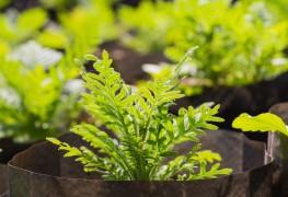 Guide utile pour la propagation des plantes