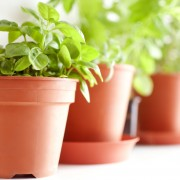 4 trucs pour de belles plantes vertes intérieures