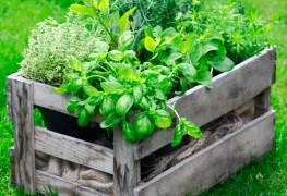Quand et comment arroser les plantes