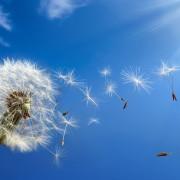 15 manières simples de réduire les symptômes d'allergies