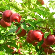 Tâches à faire durant les 4 saisons du jardinage