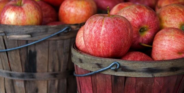 Guide pour choisir les variétés de fruits anciens