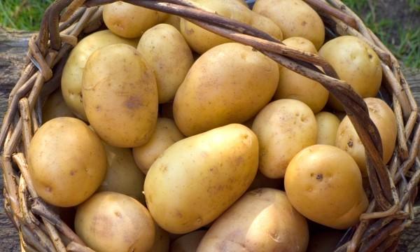 tout ce qu 39 il faut savoir sur la cuisine et la conservation des pommes de terre trucs pratiques. Black Bedroom Furniture Sets. Home Design Ideas