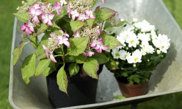 Choisir les bons pots pour les plantes d'intérieur et depatio