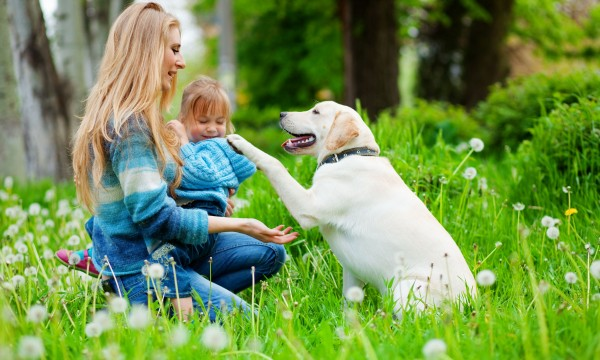 6 conseils pour débarrasser vos animaux domestiques des tiques