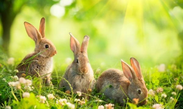 comment garder les lapins hors de votre jardin trucs pratiques. Black Bedroom Furniture Sets. Home Design Ideas