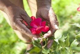 Quelques conseils pour profiter de roses en santé dans votre jardin