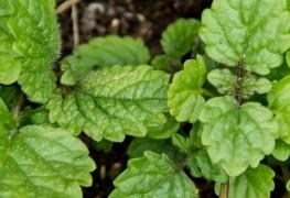 Étonnants jardins intérieurs d'herbes aromatiques à faire vous-même