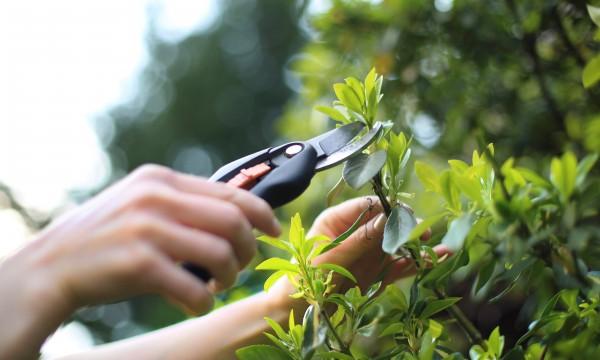 Cet été, économisez en jardinant