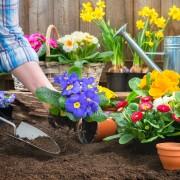 Secrets pour conserver un jardin parfait tout au long de l'année