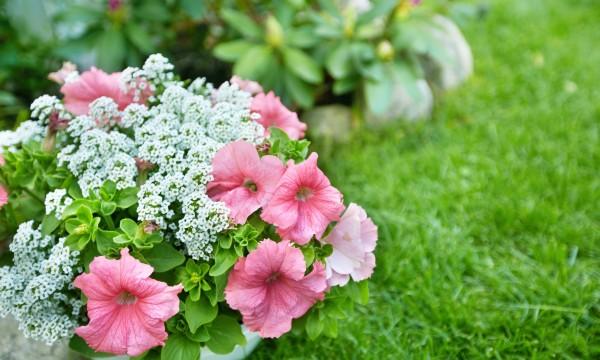 18 secrets de planification d'un jardin à entretien réduit