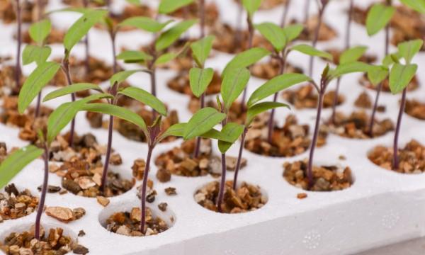 Récolter, semer et entretenir les graines et semis