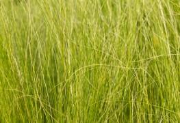 Premiers soinspour votre pelouse:gazon ombragé