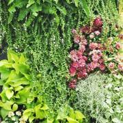 Votre guide d'information surles arbustes et les arbres d'ornement