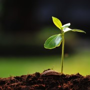 Comment tirer le meilleur parti de tous lestypes de terrede jardin