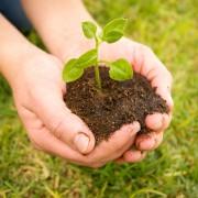 Guide pour prendre soin du solde son jardin