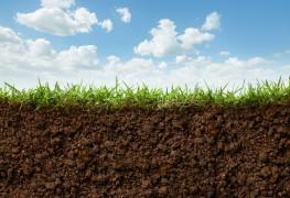 Conseils pour évaluer la santé de votre pelouse