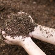 À chaque plante son type de sol